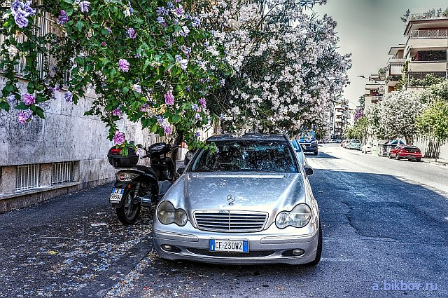 Mercedez under Blossom